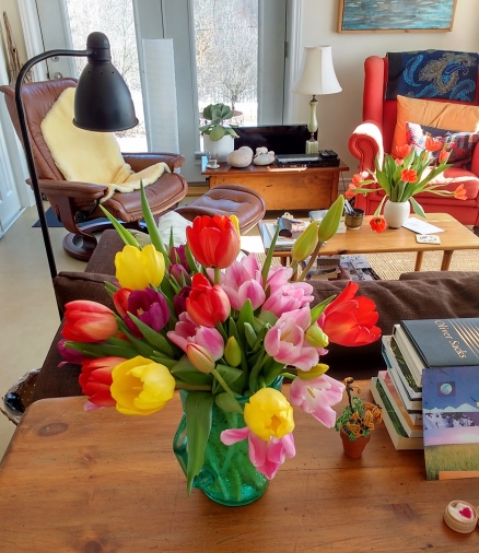 Alan's beautiful tulips