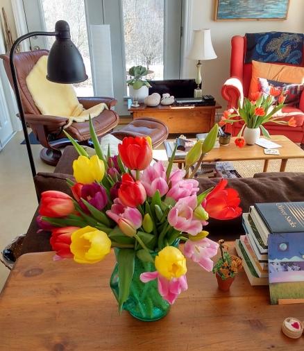 Alan's beautiful tulips